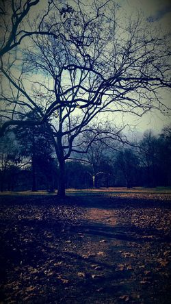 Tree_collection  Trees And Nature Natura Nature Photography Nature Cold Beauty In Nature EyeEm Nature Lover Intersting