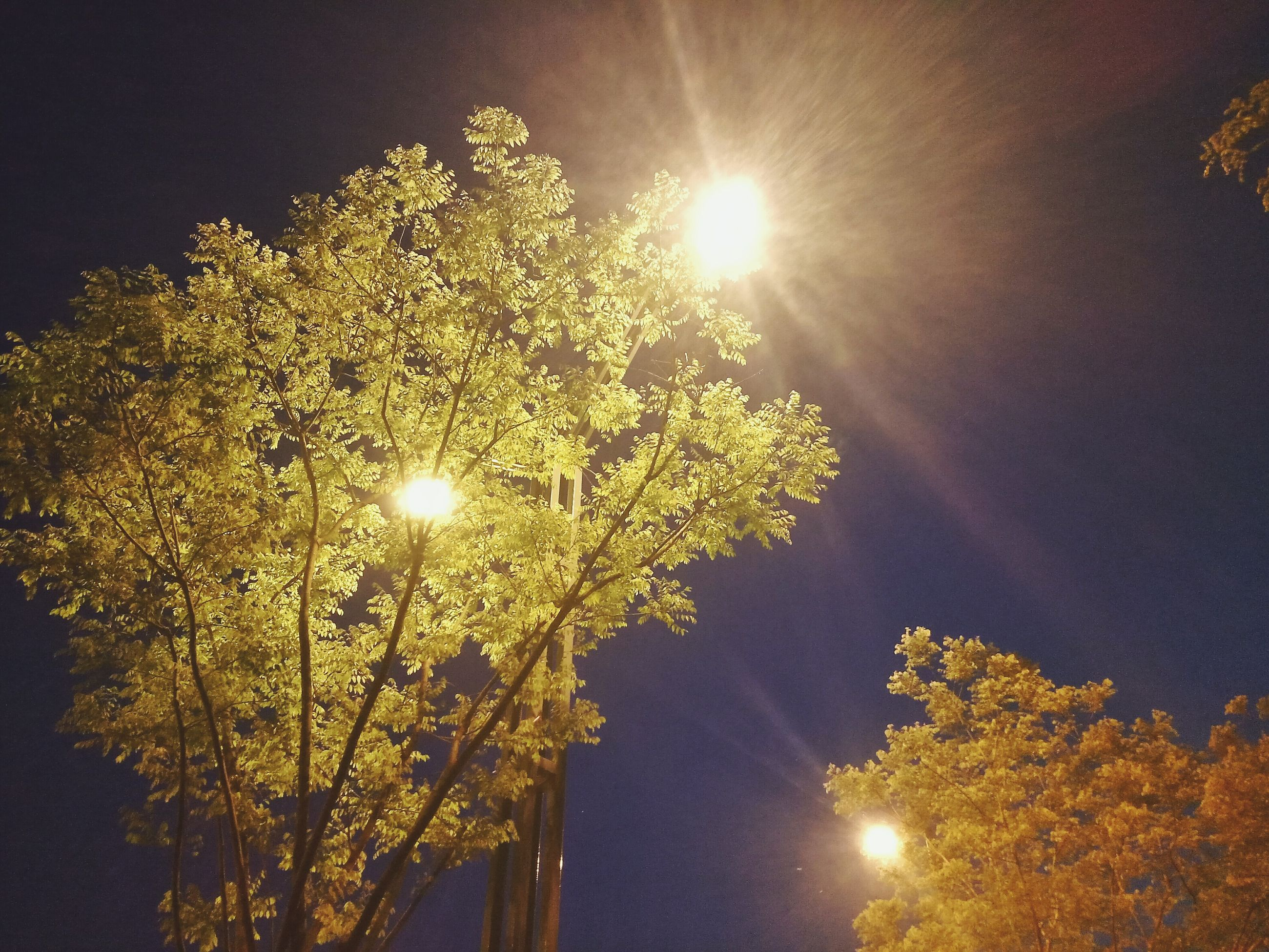 tree, low angle view, sun, illuminated, night, growth, lens flare, branch, nature, street light, lighting equipment, beauty in nature, glowing, sky, sunbeam, sunlight, moon, tranquility, clear sky, outdoors