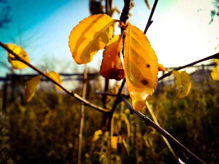 #sun #rain #photo #professionalphoto #EyeEmNewHere #EyeEm #EyeemPhilippines #EyeEmEsterlinda Nature Outdoors Leaf Autumn No People Day Plant