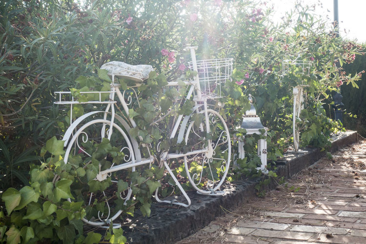 Bicycle in garden