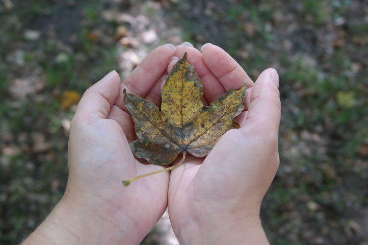 Autumn Autumn Colors Autumn Leaf Fall Fall Colors Holding Leaf Leaf In Hand Personal Perspective