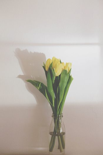 Close-Up Of Yellow Tulips In Vase Against Wall