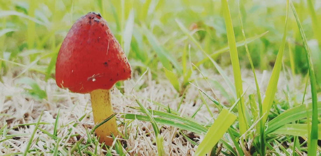 Cute Mushroom 😍 Love Outdoors Mushroom