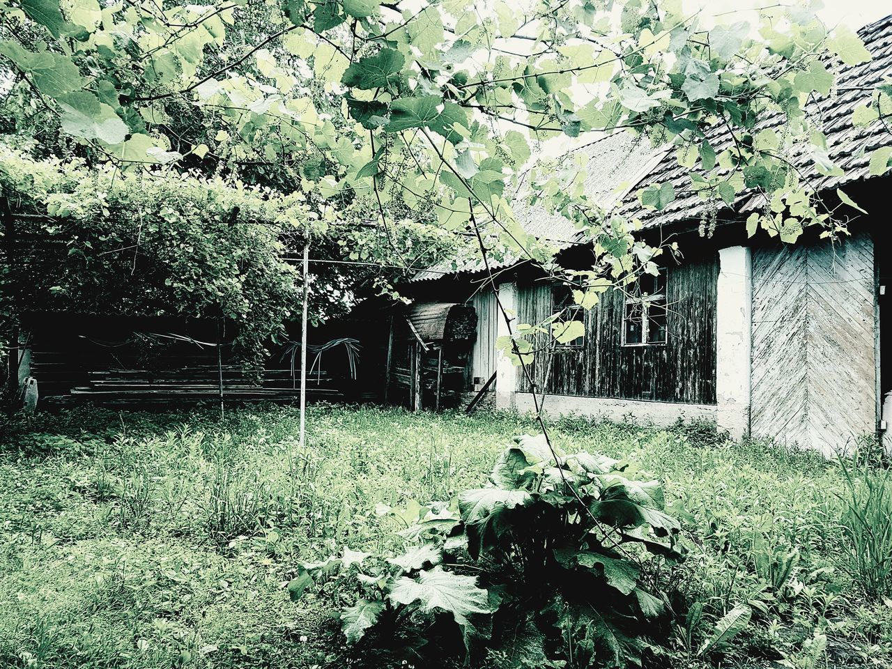 plant, built structure, architecture, tree, growth, building exterior, nature, building, no people, day, house, abandoned, outdoors, flower, plant part, green color, leaf, land, flowering plant, beauty in nature, ruined