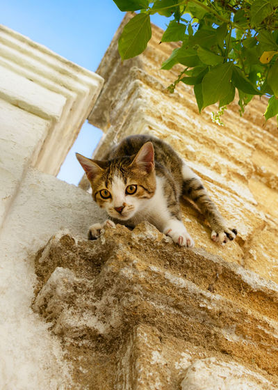 Cute little kitten climbs sportive down a wall, using its claws. Curious Cat FUNNY ANIMALS Funny Pet Portraits Wall Animal Themes Cat Cats Claws Climbing Cute Cute Cats Domestic Cat Feline Feline Portraits Frisky Kitten Kittenish Kitty Cat Outdoors Paws Pets Sportive Tabby Cat Young Animal