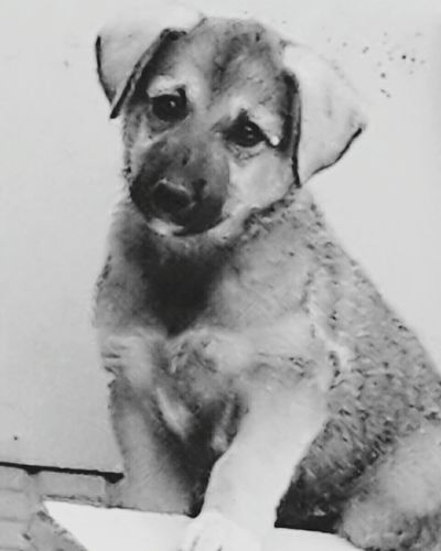 Köpeğimiz Yeni Yeni Yavruköpek Yavru KopegimizKral Kral Kral KingDogs King