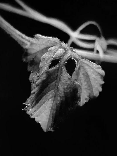 leaves in black
