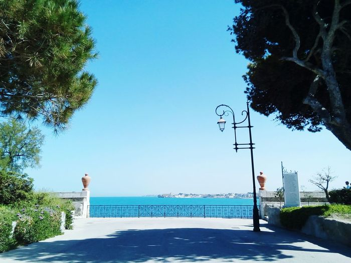 Pine Tree Adriatic Sea Park Amphoras Park Road Tree Water Blue Sky Horizon Over Water