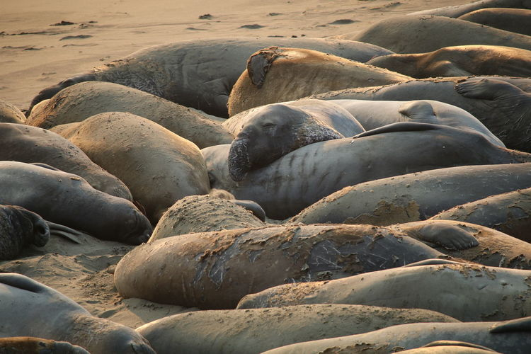 Close-Up Of Seals On Beach