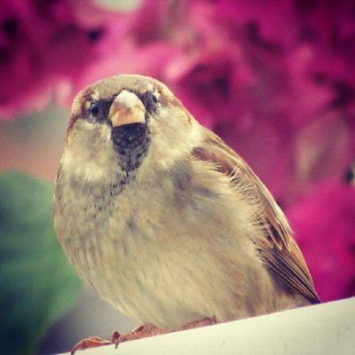 Instagallerys Instagalleries Instagram Bird