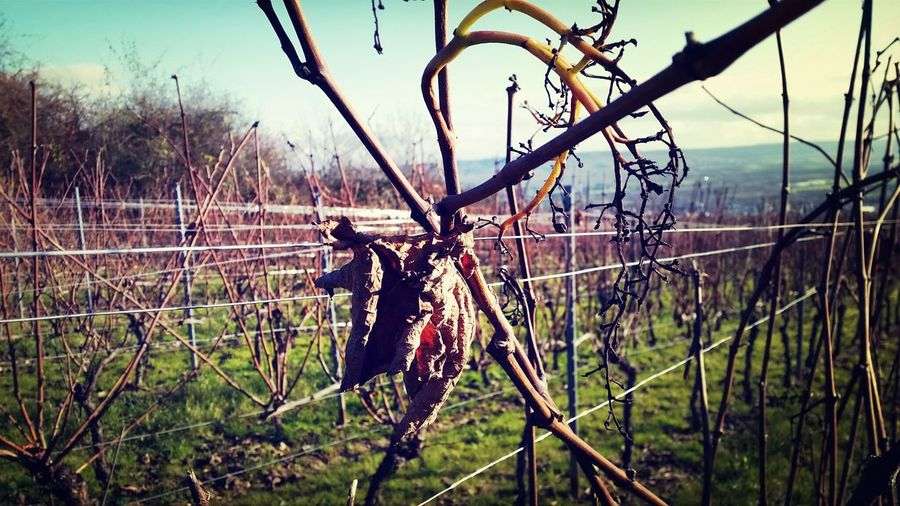 Wine in Winter Winteriscoming Winterisokay
