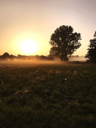 Field Grass Tree Fog Morning Sky Tranquil Scene Sun Beauty In Nature Sunset Tree Field Outdoors Sunlight Landscape Idyllic No People Silhouette Scenics - Nature Tranquility Nature