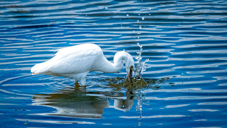 View of bird in lake