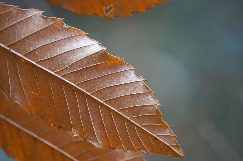 Close-up of dry leaves during autumn