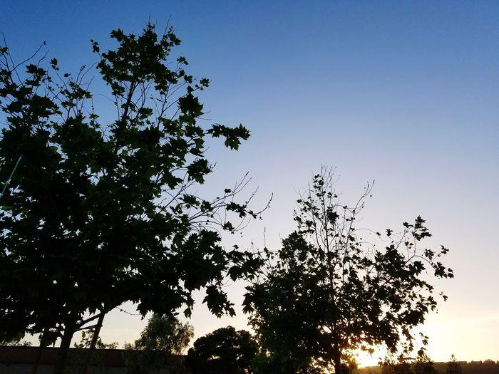 Setting sun 🤓 Outdoors Sky