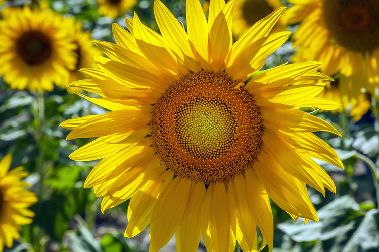Flower Yellow Flowering Plant Fragility Vulnerability  Flower Head Beauty In Nature Growth Freshness Plant Petal Inflorescence Close-up Sunflower Pollen Focus On Foreground Nature Day No People Invertebrate Outdoors Pollination