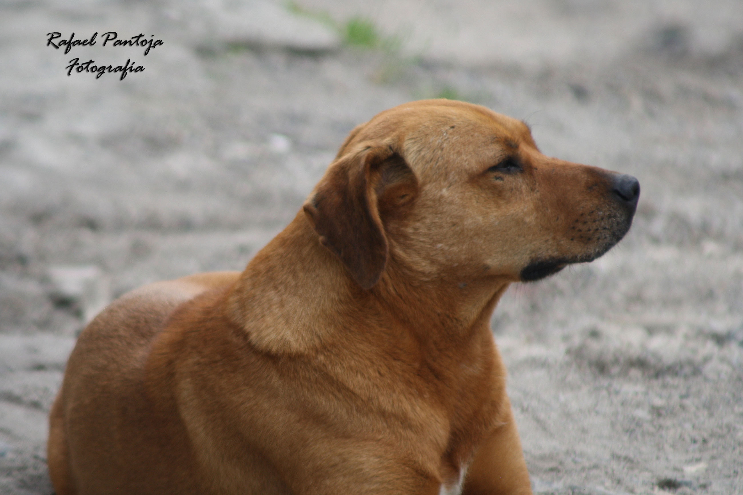 dog, one animal, animal themes, mammal, pets, close-up, outdoors, no people, day, domestic animals, nature
