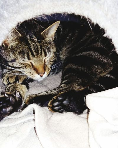 A Sleeping Tabby Kitty Cat in his Bed . Featuring No People Close-up Indoors  Animal Themes One Animal Winter Day Mammal Nature Warm Sleep Relaxed Cute Kitty Cat Chilling Loved Happy Safe