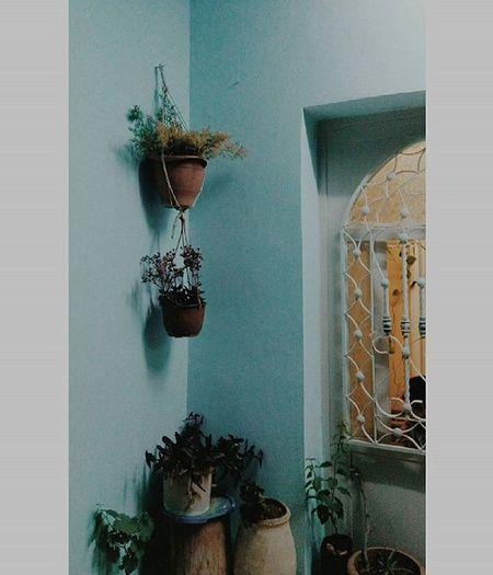 Simply blue. Blue Bluewall Concrete Rural Plants زريعة Flowers Springnights Spring Photography Photographer 4april Family Door Opening Ornaments Steelornaments Villagelife Jordan Camerji Cam Mafraq HTC HtcLove