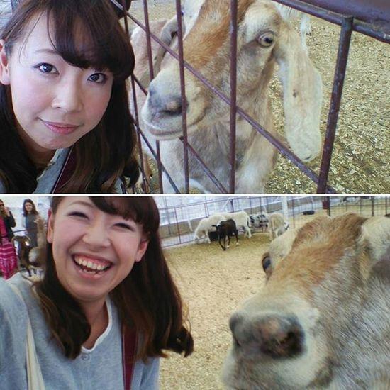 ヤギ とのツーショット 撮影 アメリカまで来てヤギと戯れる プライベート アメリカでの休日 笑顔 休日 アメリカ 小さな牧場 テキサス ダラス 撮影大変でした TwistAndShout 全力で遊ぶ 遊び Happy Smile Enjoy USA Texas Nozomi Goat Instalike Instagood
