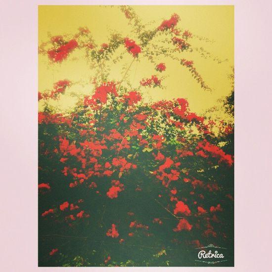 Flores da casa minha mamãe MT lindas Welcome Primavera ? ?
