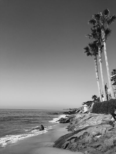 Palm Tree Blackandwhite Beach Beach Sea Sand Copy Space Clear Sky Nature Horizon Over Water Water Summer Outdoors Beauty In Nature Day Tranquility Scenics Sky No People Go Higher