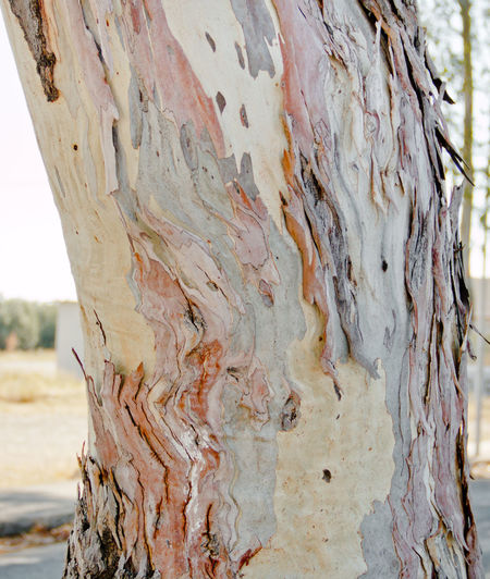 Rhodos, Greece  Wave Bark Close-up Damaged Day Focus On Foreground Land Natural Pattern Nature No People Outdoors Plant Plant Bark Structure And Nature Summer ☀ Textured  Tree Tree Trunk Wood - Material