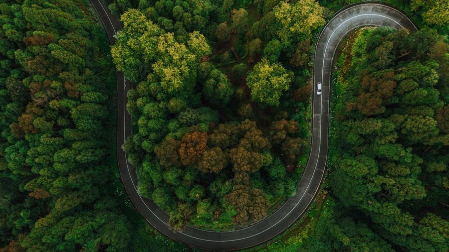 Roads from Azores Road Plant Green Color Growth No People Beauty In Nature Nature Tree High Angle View Outdoors Aerial View First Eyeem Photo