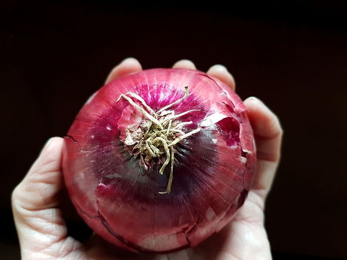Blue Onion Onion Human Hand Black Background Red Holding Pink Color Close-up