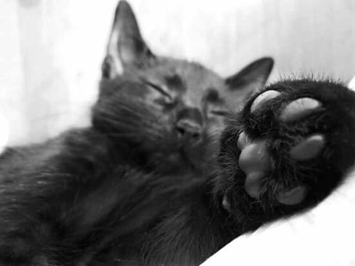 Goodnight Home Sweet Home Animal Photography Honey ❤ Sweet♡ Loveit Black Cat Kocie Dziecko Łobuz Kocham Cie ♥
