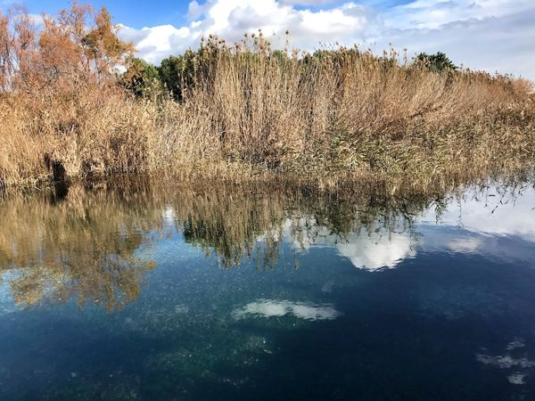 Trekking Piante Riflesso Water Acqua Masseria Battendieri Reflection Nature Beauty In Nature Tranquil Scene Water No People Outdoors Tranquility