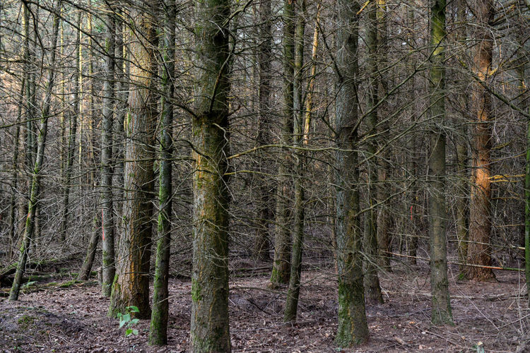 Het Zandenbos is a forest area in Nunspeet The Netherlands Netherlands Nunspeet The Netherlands Tree Tree Trunk Trees Wood Forest Forest Photography Holland Rondehuis Woods Zandenbos