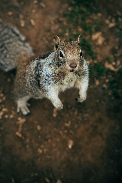 Begging Squirrel Animal Themes Animal Wildlife Animals In The Wild Close-up Day Mammal Nature No People One Animal Outdoors Rodent Squirrel
