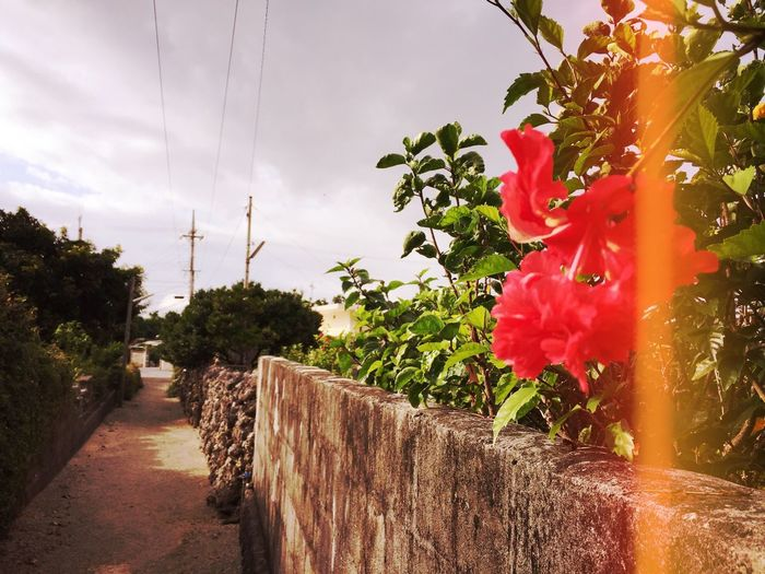 Beauty In Nature Red Hibiscus Day Growth Nature Sky Outdoors No People Oldtown Flower Fragility Freshness EyeEmNewHere 浜比嘉島 Okinawa Photogenic  Mix Yourself A Good Time The Week On EyeEm IPhoneography 沖縄 세계 Photooftheday Snap Beauty In Nature