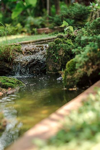 water fall in