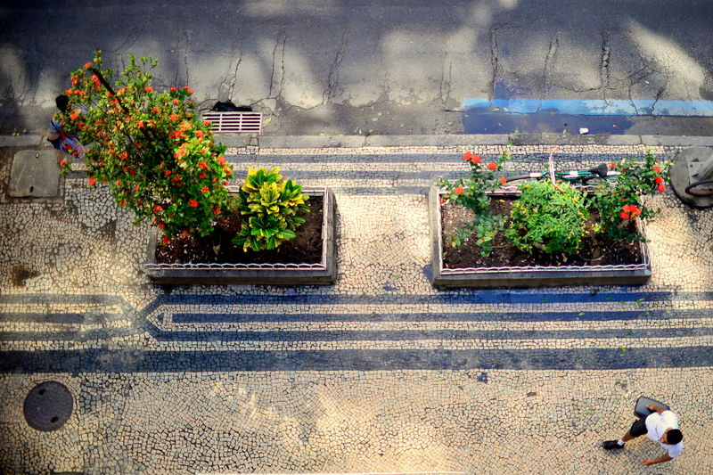 EyeEm Best Shots Eye4photography  Getting Inspired Aerial View Streetphotography Urban Urban Geometry Urbanphotography Light And Shadow Lines Asphalt Plant Nature Day Flowering Plant Growth Sunlight Shadow The Street Photographer - 2019 EyeEm Awards