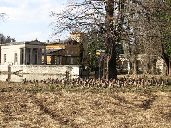 Architecture Baum Park Potsdam Römische Bäder Sansoucci