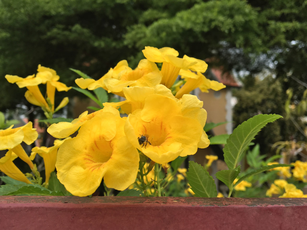 flower, yellow, plant, growth, petal, fragility, nature, beauty in nature, outdoors, insect, flower head, freshness, day, animals in the wild, animal themes, no people, bee, blooming, one animal, leaf, close-up, buzzing