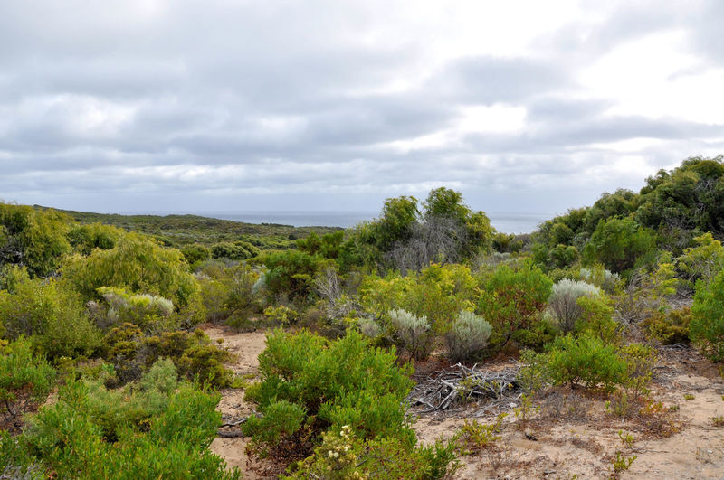 Beauty In Nature Cape Naturaliste Cloudy Coastal Day Dunes Geographe Bay Green Greenery Growth Headland Indian Ocean Landscape Lush - Description National Park Nature Outdoors Overcast Plants Scenics Sea Sky Stormy Uncultivated Western Australia