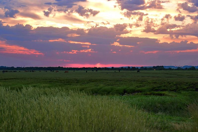 Sunset Scenics Tranquil Scene Landscape Tranquility Field Beauty In Nature Cloud - Sky Rural Scene Nature Sky Grass Agriculture Idyllic Growth Cloudy Atmospheric Mood Non-urban Scene Farm Orange Color