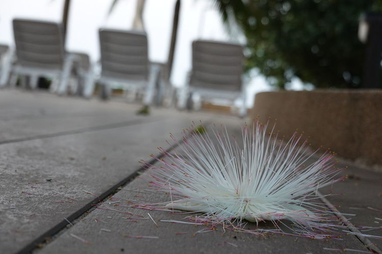 Close-up of white feather on footpath