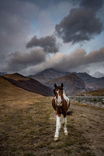 Full length of a horse on landscape