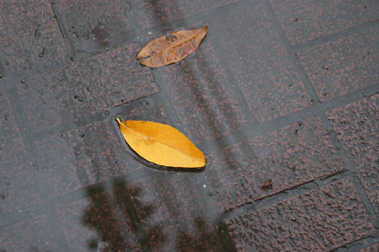 Autumn Day High Angle View Leaf Nature No People Outdoors Puddle Street Water Wet
