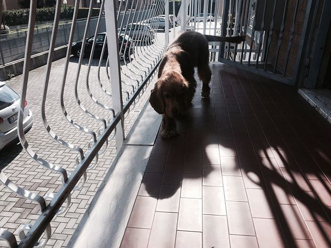 Dog Shadow Animal Day At Home Minimal White Balcony