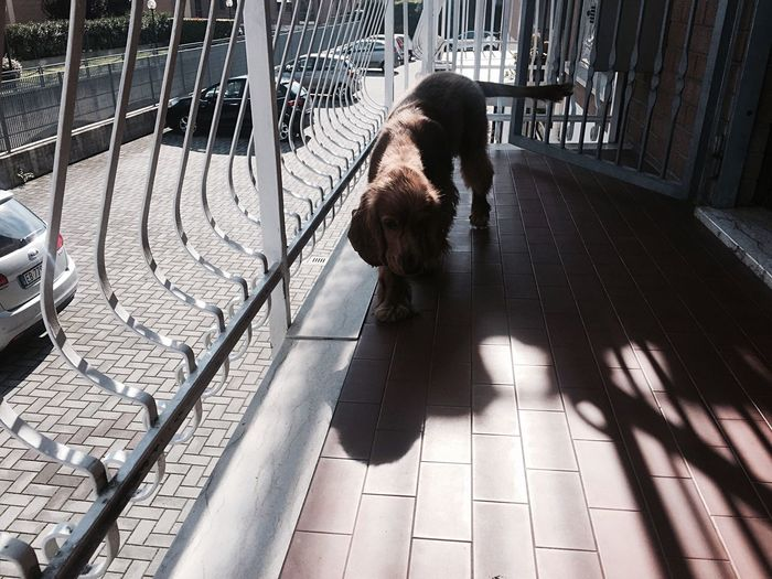 Dog Walking In Balcony