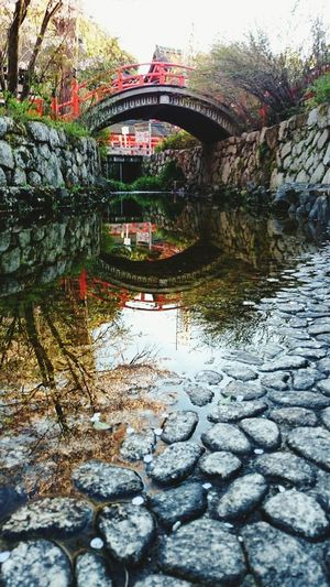 Water Tree Butiful Koyto Japan Flower Nature Bridges 下鴨神社