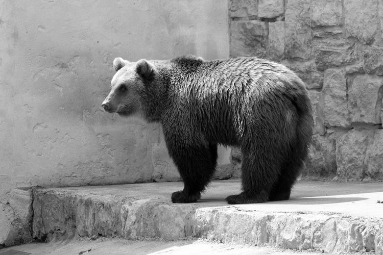 Side view of bear in zoo