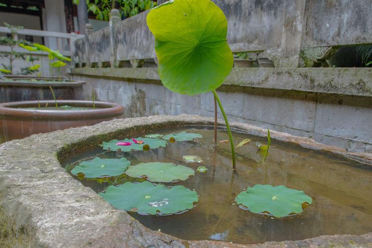 Ziseetheworld Ziwang Chinese Chinese Culture Green Green Color Fall Forest Jiuhuashan China Zhejiang,China Waterlily Waterlilies Waterfront Lotus Lotus Water Lily