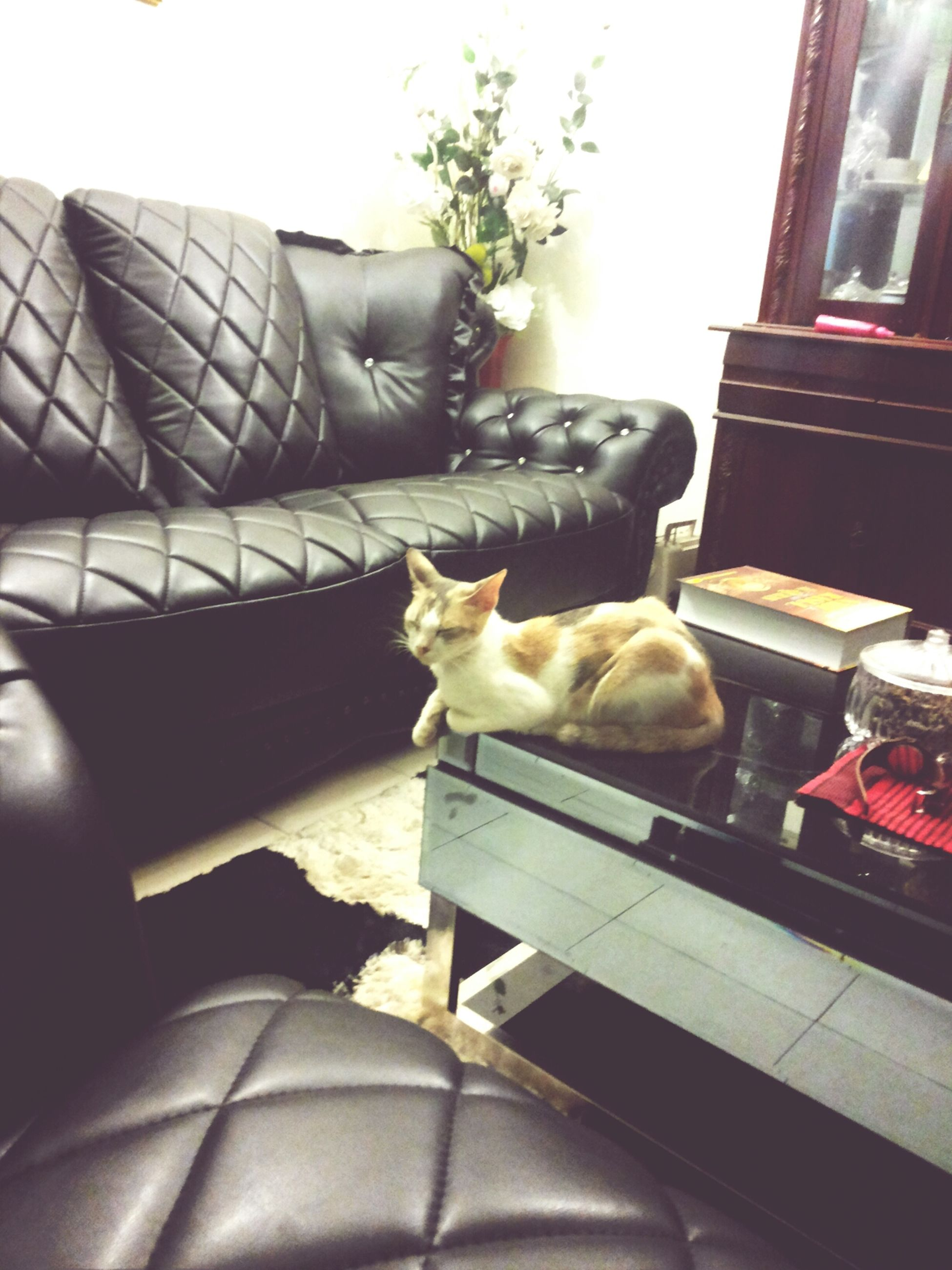 pets, one animal, domestic animals, domestic cat, animal themes, mammal, relaxation, cat, indoors, feline, chair, resting, sitting, built structure, no people, architecture, home interior, house, sofa, lying down