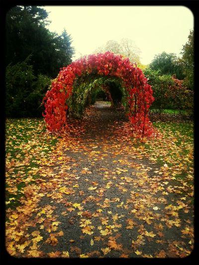 Walking Around Beautiful Nature Botanical Gardens Fall Colors